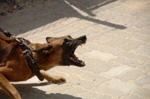 Canine Bite Attorney