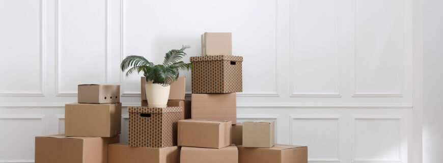 Heap,Of,Cardboard,Boxes,And,Houseplant,Near,White,Wall,Indoors,